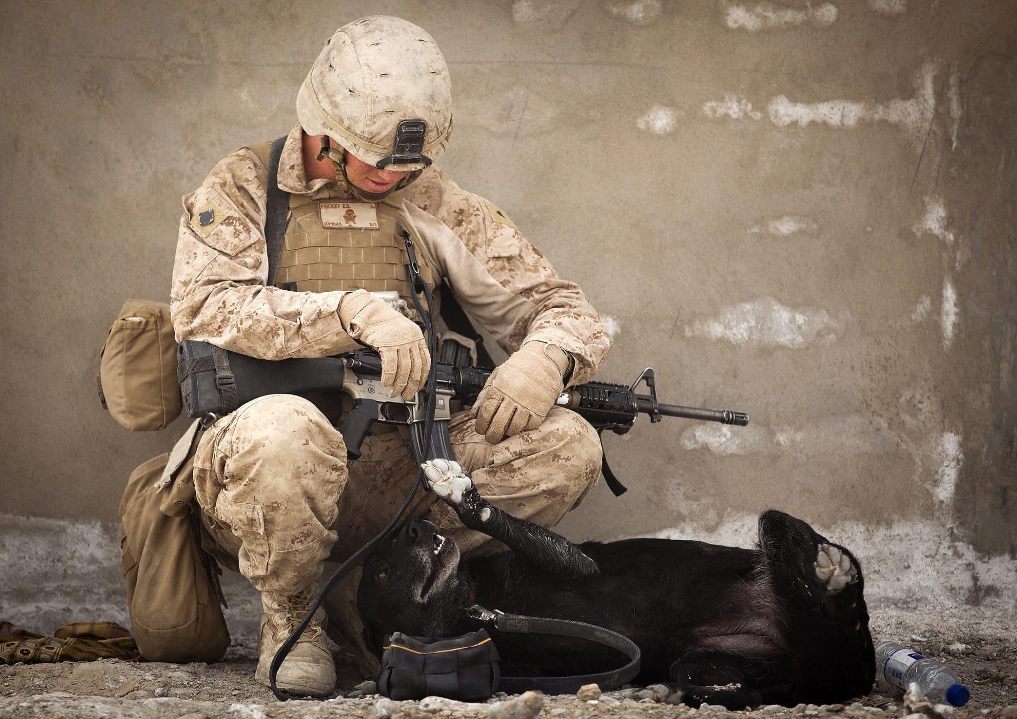 Śpiący w kuckach żołnierz z psem